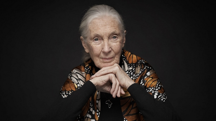 Dr. Jane Goodall is one of many speakers at the Virtual Wildlife Conservation Expo. Photo courtesy of Dr. Jane Goodall/Wildlife Conservation Network.